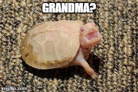 grandma turtle